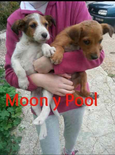 Pool y moon